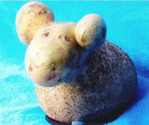 Pottato or sheep? PottatoHead Taking Photos Hello World Hanging Out Photography Vegetables Vegetable Garden