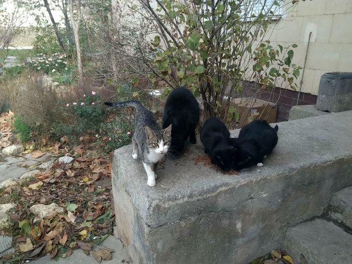 cats Cat Pets