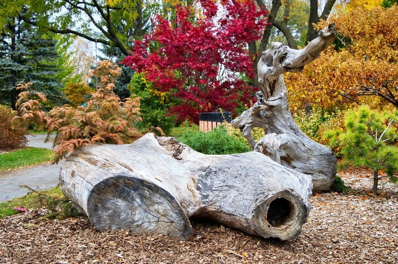 Plant Tree Day Nature No People Autumn Change Park Park - Man Made Space Outdoors Tree Trunk Growth Plant Part Trunk Sculpture Art And Craft Land Representation Statue Leaf Birch Wood