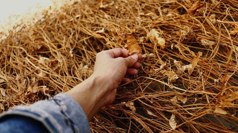 High angle view of person hand holding hay