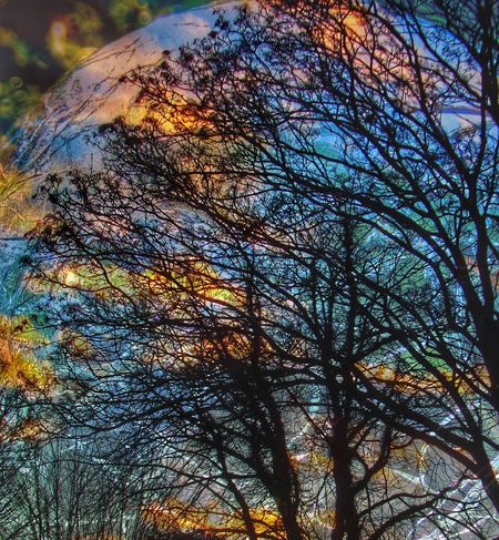 Overlay Editing EyeEmNewHere EyeEm Best Shots - Nature Abstract Photography Glass - Material Crystal Ball Tree Low Angle View Day No People Nature Outdoors Growth Backgrounds Full Frame Sky Beauty In Nature Branch