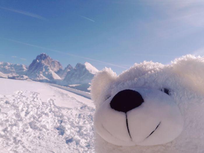White Bear Bear