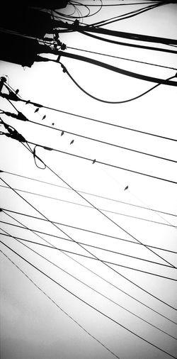 Minimalism Black And White Birds EyeEm Nature Lover