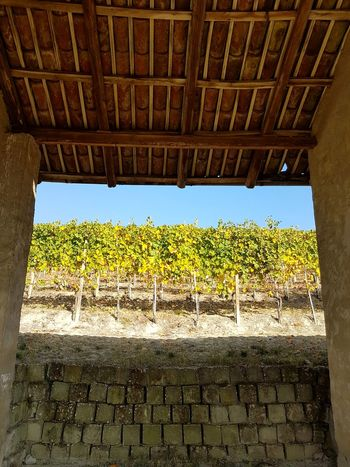 Rural Scene Day Agriculture Outdoors No People Langhe Piedmont Italy Travel Destinations Tranquility Porch Rural Building Raw Wall Vineyard Autumn