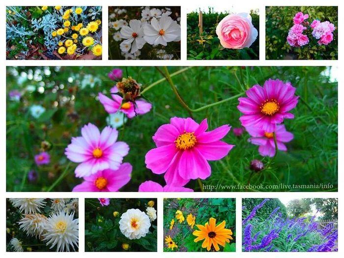 EyeEm Nature Lover Nature EyeEm Flower Flower Collection