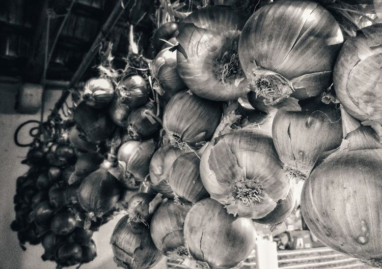 Beautifully Organized Close-up Onions Countryside
