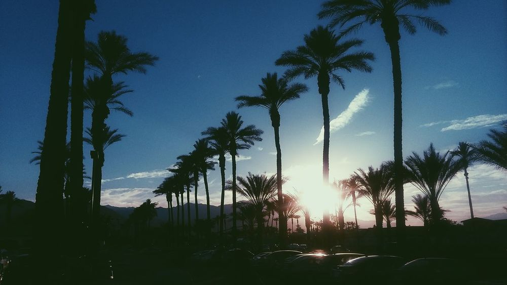 Tree Palm Tree Sky Nature Sunset No People Outdoors Landscape Day Phone Photography VSCO Vscocam Vintage California Palm Desert, CA Blue California Dreaming California Sunset
