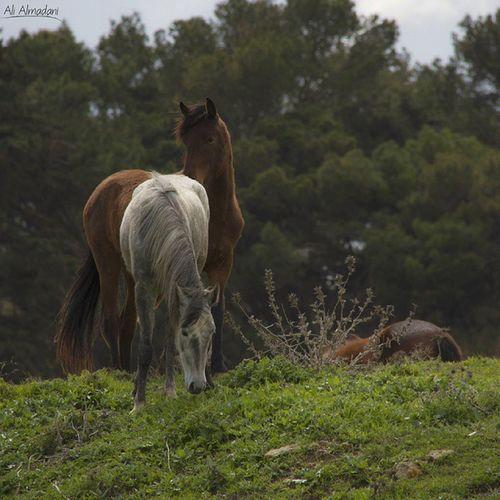 شحات معبد_زيوس خيل Vscocam Vaso Horse Cereny Ilike Add Libya Photo Photography Following Canon Canon7d  Canon_photo Canon_photography Arab_photography Arab_photo Ali_Almadani_photography