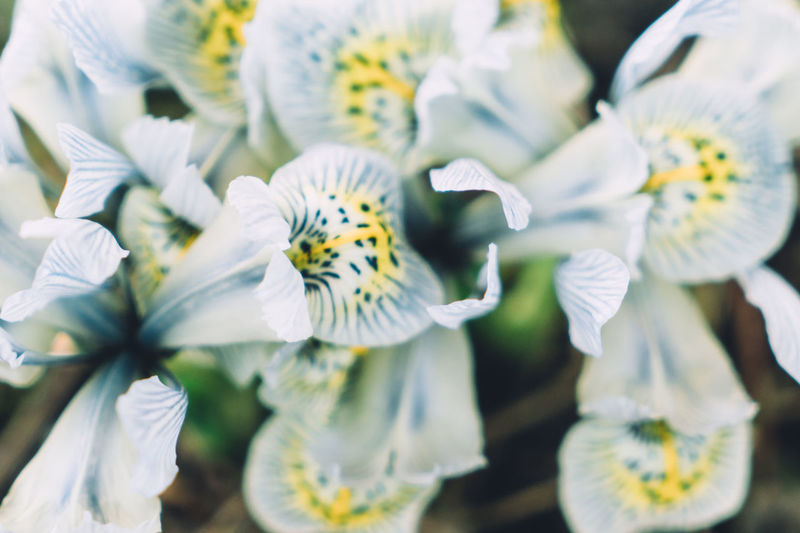 Atmosphere Atmospheric Atmospheric Mood Close-up Flower Flower Head Fragility Freshness Growth Horizontal Iris Iris - Plant Nature No People Petal Plant Pollen