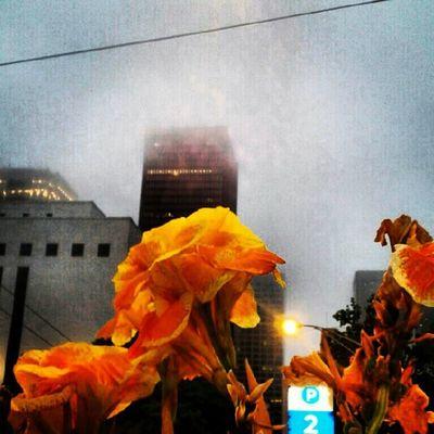 Fog IloveSeattle Downtown Instafy instalove instagram instadaily projectlookup picoftheday photooftheday photoaday. Good Morning!