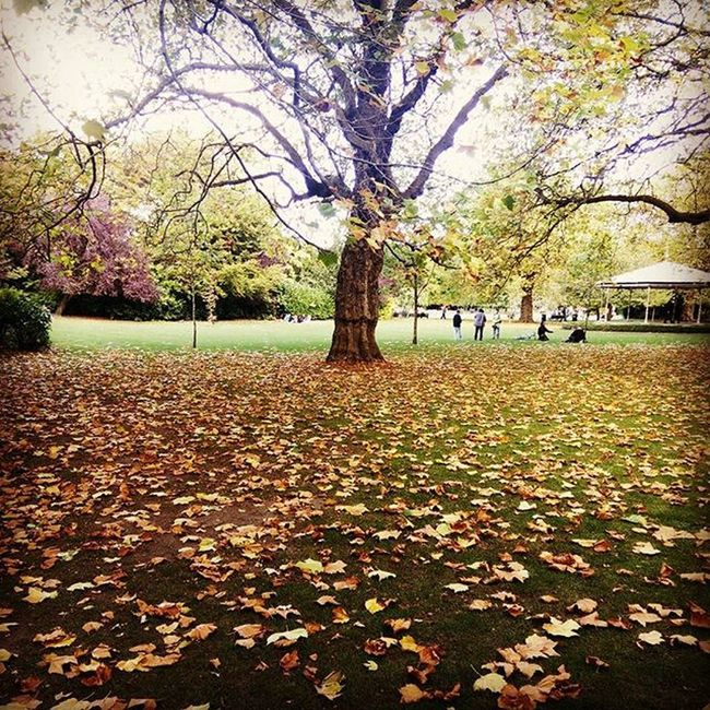 Leaves Winter Dublin Walktoremember Fall Colors a walk in the park