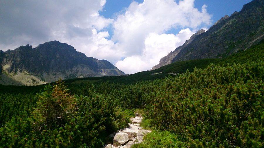 Wildlife & Nature In Der Krummholzzone, So Sieht Ein Schöner Wanderweg Aus vysoke tatry