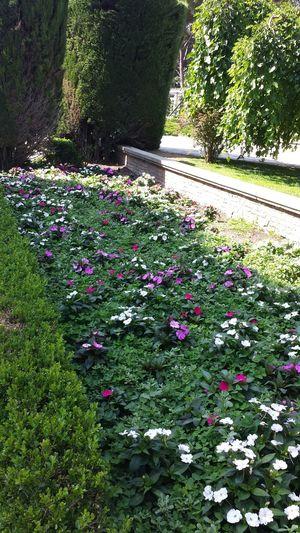Parque del Retiro MADRID. ....la mejor ciudad del mundo Park Flowers Environment