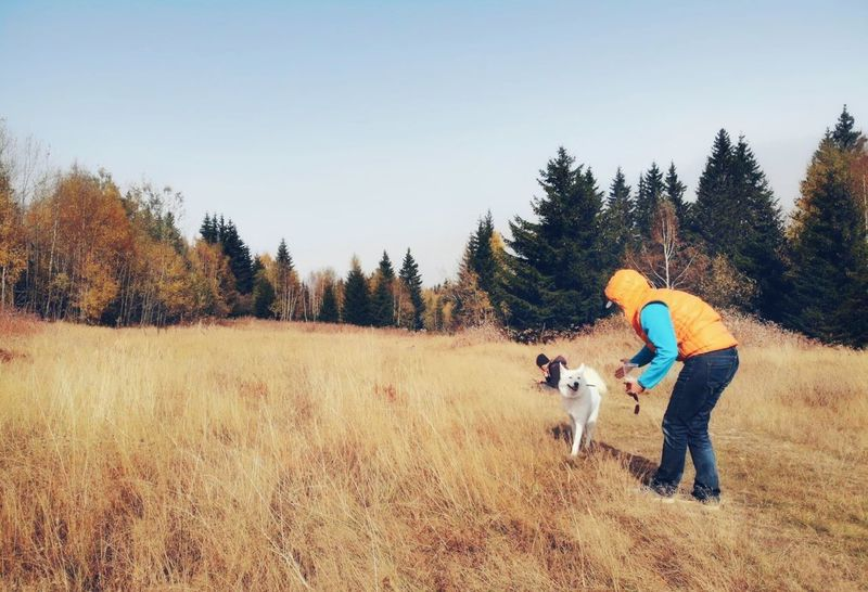 Hiking Autumn Hiking Drone  Vitosha Mountain Bulgaria Bulgarian Nature Tree Plant Mammal One Animal Land Domestic Animals Field Real People Sky Nature Pets Domestic Day Canine Dog Leisure Activity Clear Sky Outdoors Autumn Mood