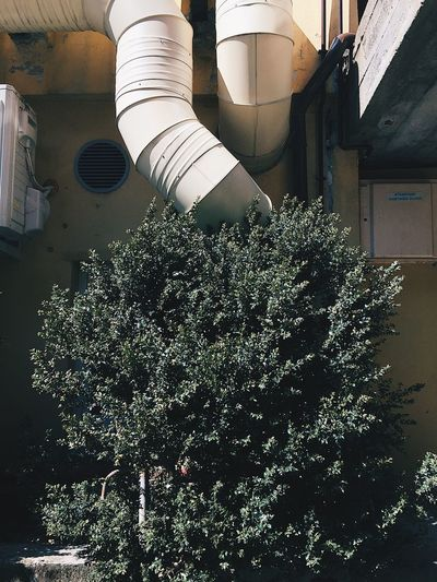 Growth Architecture Plant Built Structure No People Building Exterior Tree Outdoors Day Factory