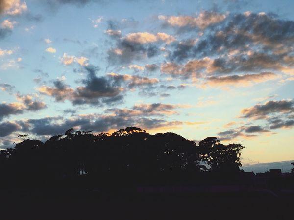 Auckland New Zealand Domain Morning Sky Vanilla Sky Silhouette Gum Trees