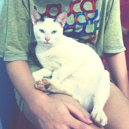 Cute Cats Cute Pets Cat Lovers I Love My Cat