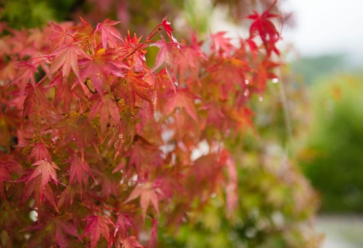 Nature Growth Autumn Beauty In Nature Focus On Foreground Day Outdoors No People Leaf Close-up Plant Flower Fragility Tree Freshness