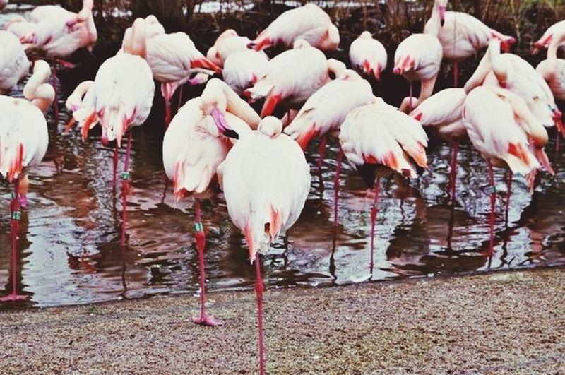 Prague Zoo Flamingo Birds