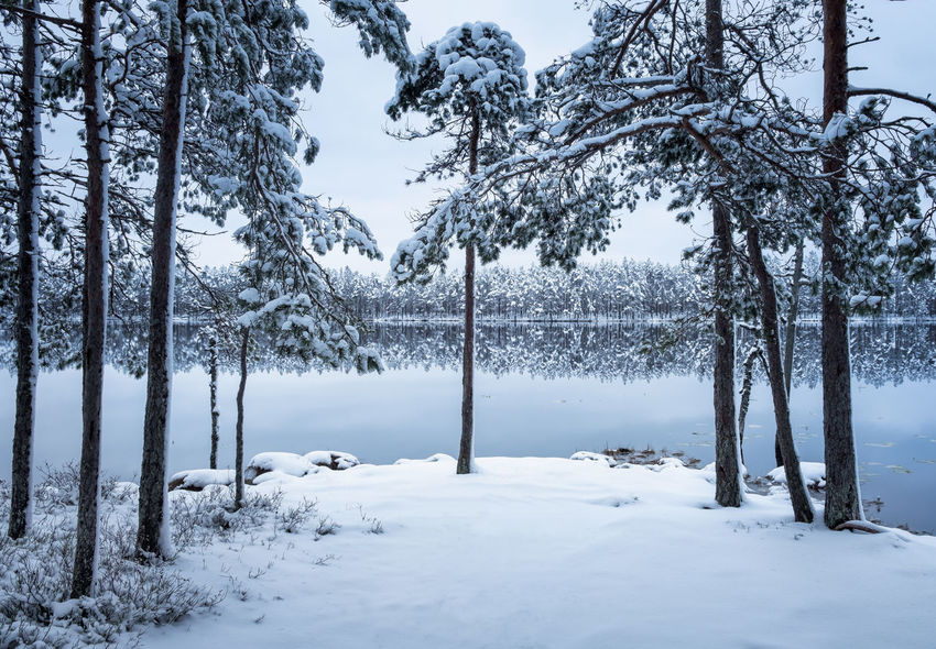Scenic landscape with forest and lake at winter evening in Finland Moment Of Silence Nature Atmospheric Mood Beauty In Nature Blue Cold Cold Temperature Evening Frozen Lake Landscape Nature No People Outdoors Scenics Snow Tranquil Scene Tranquility Tree Tree Trunk Water Weather White White Color Winter