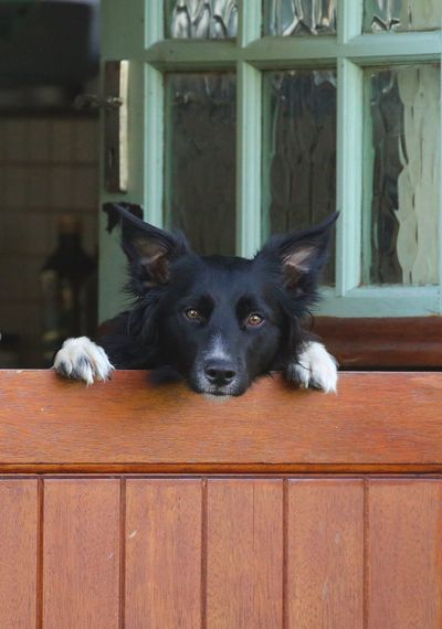 I'll be out to play in a bit... :) Stable Door Collie One Animal Mammal Domestic Dog Pets Canine Animal Themes Domestic Animals Animal Looking At Camera Black Color Day No People Portrait Wood - Material Relaxation
