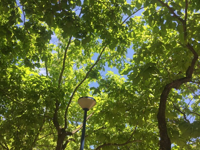 Low Angle View Tree Plant Growth Green Color No People Nature Leaf Day Lighting Equipment Plant Part Outdoors Sunlight Sky Beauty In Nature Tranquility Freshness