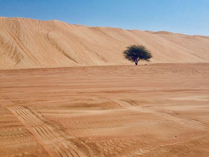 Tree Landscape Sand Scenics - Nature Desert Environment Nature Sand Dune Tranquil Scene Plant