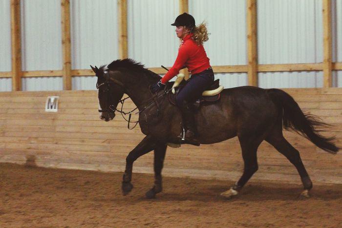 Horse Raita Girl Equestrian Showjumping Finland