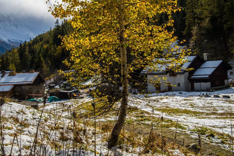trelechamps,chamonix,haute savoie,france Tree Plant Snow Winter Cold Temperature Architecture Built Structure Nature Building Exterior House Day Building Beauty In Nature No People Growth Land Change Autumn Covering Outdoors
