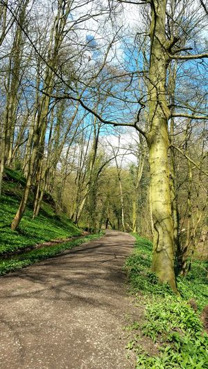 Skipton Skipton Castle Skipton Wood Blue Sky And Trees Pathway Trees And Sky Through My Eyes Walking Around Walking In The Woods