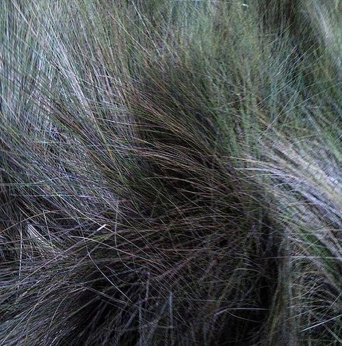 Ustedno Wavesofgrass Ecuador Nuestronorteeselsur Lagunademojanda