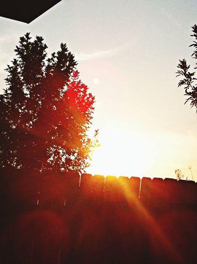 Nature Sunset Enjoying The Sun Colors