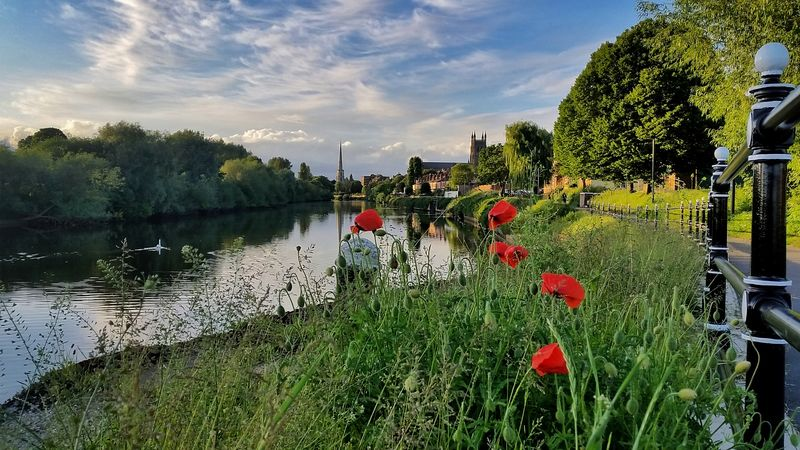 Worcester Cathedral River Severn Poppies  Swan Cycle Ride Golden Hour My Cloud Obsession☁️ Worcester Worcestershire England 🌹 EyeEm Best Shots - Nature The Great Outdoors - 2017 EyeEm Awards Exceptional Photographs EyeEm Best Shots Eye4photography  Point Of View Landscape_Collection Landscape Cloud - Sky Outdoors Beauty In Nature Freshness