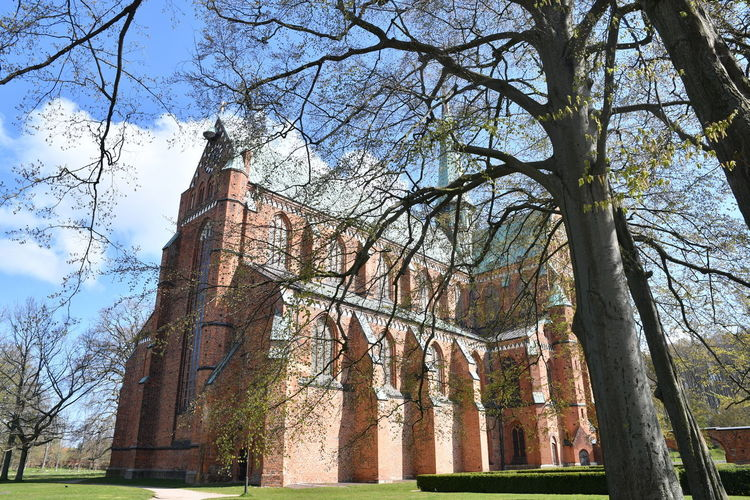 Zu Besuch in Bad Doberan Bad Doberan Münster Kirche Church Church Architecture Mecklenburg-Vorpommern Tree Plant Architecture Built Structure Sky Low Angle View Nature Religion Place Of Worship Spirituality Tree Trunk Belief Trunk Building Exterior Day History No People Branch Outdoors