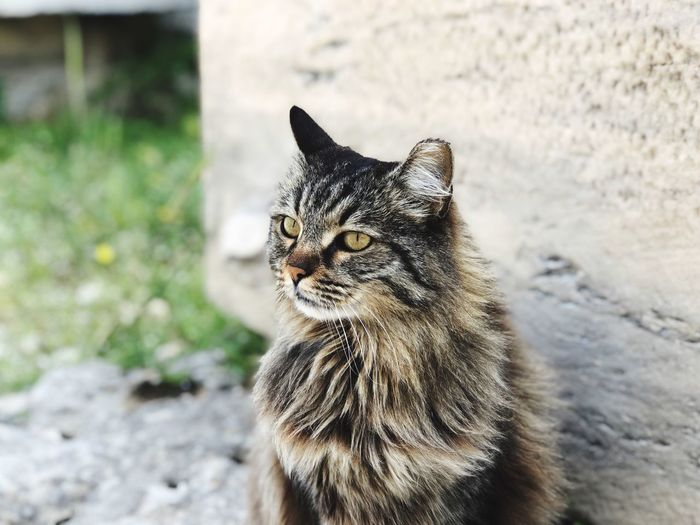 Close-up of cat looking away against wall
