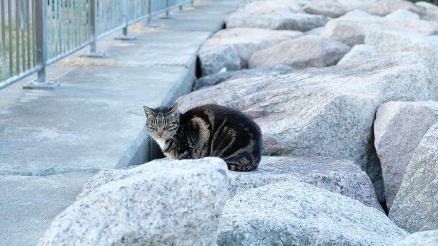 Stray Cat Meow🐱 Cat♡ Cat Lovers 野良猫 Fujifilm Fujifilm_xseries Kot Chat Meow Neko Cats Cats Of EyeEm Cat Photography Cats 🐱 Gato Gatto Katze 貓 猫 Cat