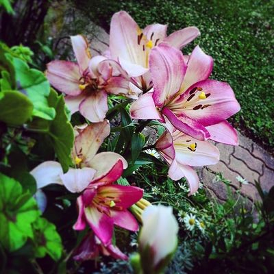 Une envie de douceur Supermonkeyflyphotos Supermonkeyfly Me 2014 blackdreams flore flower sweet paysage pics