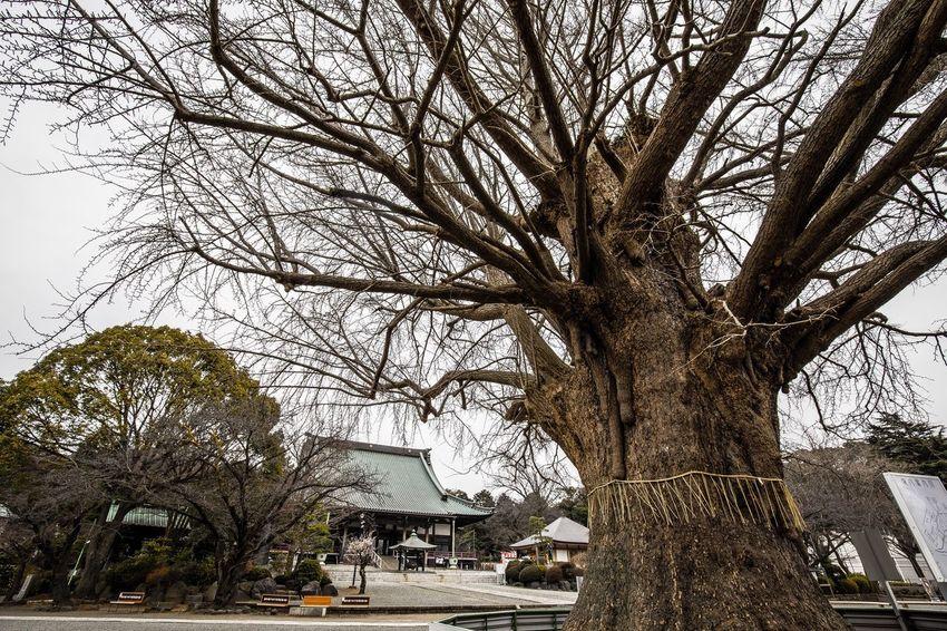 藤沢 遊行寺