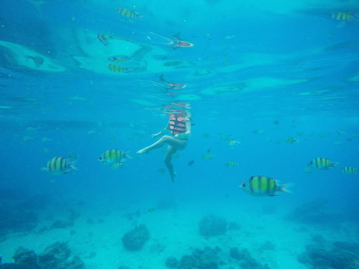 Low section of woman amidst fish swimming in sea