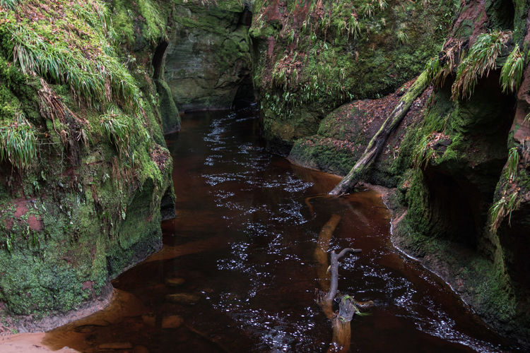 Devil's Pulpit in Schottland 10-18mm Devil's Pulpit Fine Art Photography Nature Photography Schottland TheWeekOnEyeEM Travel Photography Wanderlust Beauty In Nature Canon EOS 750D Day Flowing Water Forest Moss Motion Nature Naturelovers Newoneyeem No People Outdoors Rock - Object Scenics - Nature Tranquility Travel Destinations Water