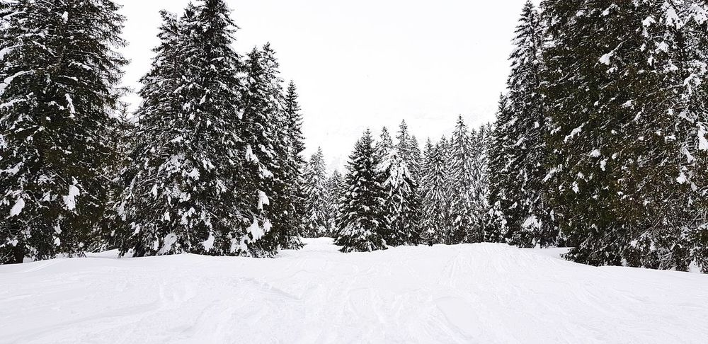 Snow Cold Temperature Winter Tree Sky Deep Snow Powder Snow Ski Track Snowboarding Skiing Helmet Ski Goggles Ski-wear Skiing Extreme Weather Snowfall Snowcapped Mountain