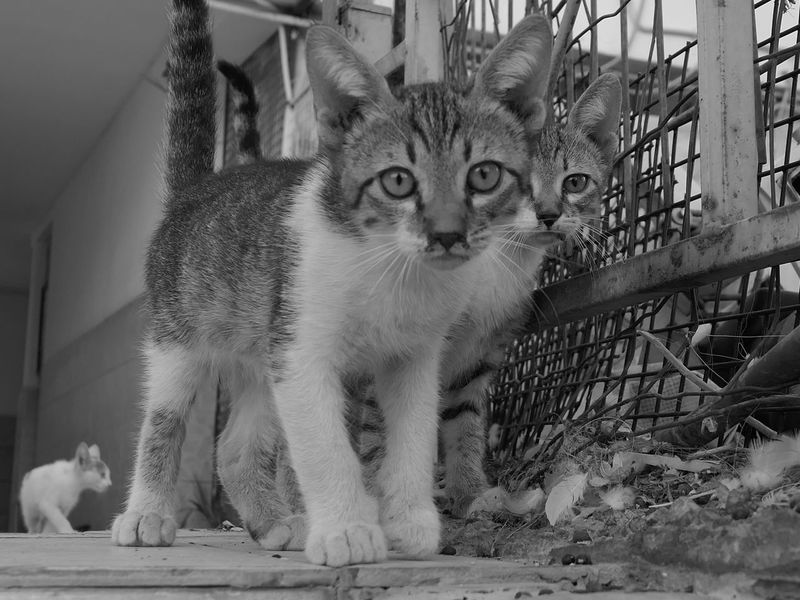 Outdoors City Street Street Photography Two Animals Mammal Cat Feline Domestic Animals Pets Vertebrate Domestic Domestic Cat No People Looking At Camera Portrait Day Looking