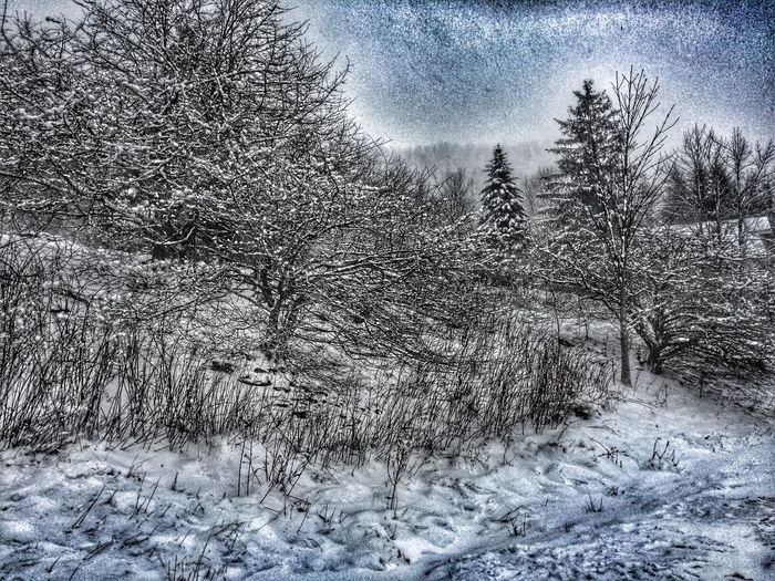 Blue Winter Winter Wonderland Winter Trees Winterscapes Wintertime Winter Trees Cold Winter ❄⛄ It's Cold Outside Cold Days Cold Cold Temperature Landscape Landscapes Landscape_photography Blue Frozen Freezing ❄ Freezing Freezing Cold First Eyeem Photo Baby, It's Cold Outside FirstEyeEmPic First Snow EyeEm Best Shots The Great Outdoors - 2016 EyeEm Awards