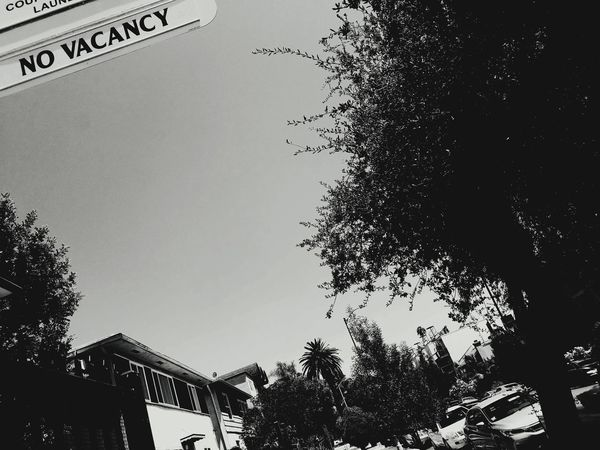 The Week On EyeEm No Vacancy City Black And White B & W Photography Palm Trees Hollywood Day Low Angle View EyeEmNewHere No People EyeEmBestPics Rents Too High Scared To Move