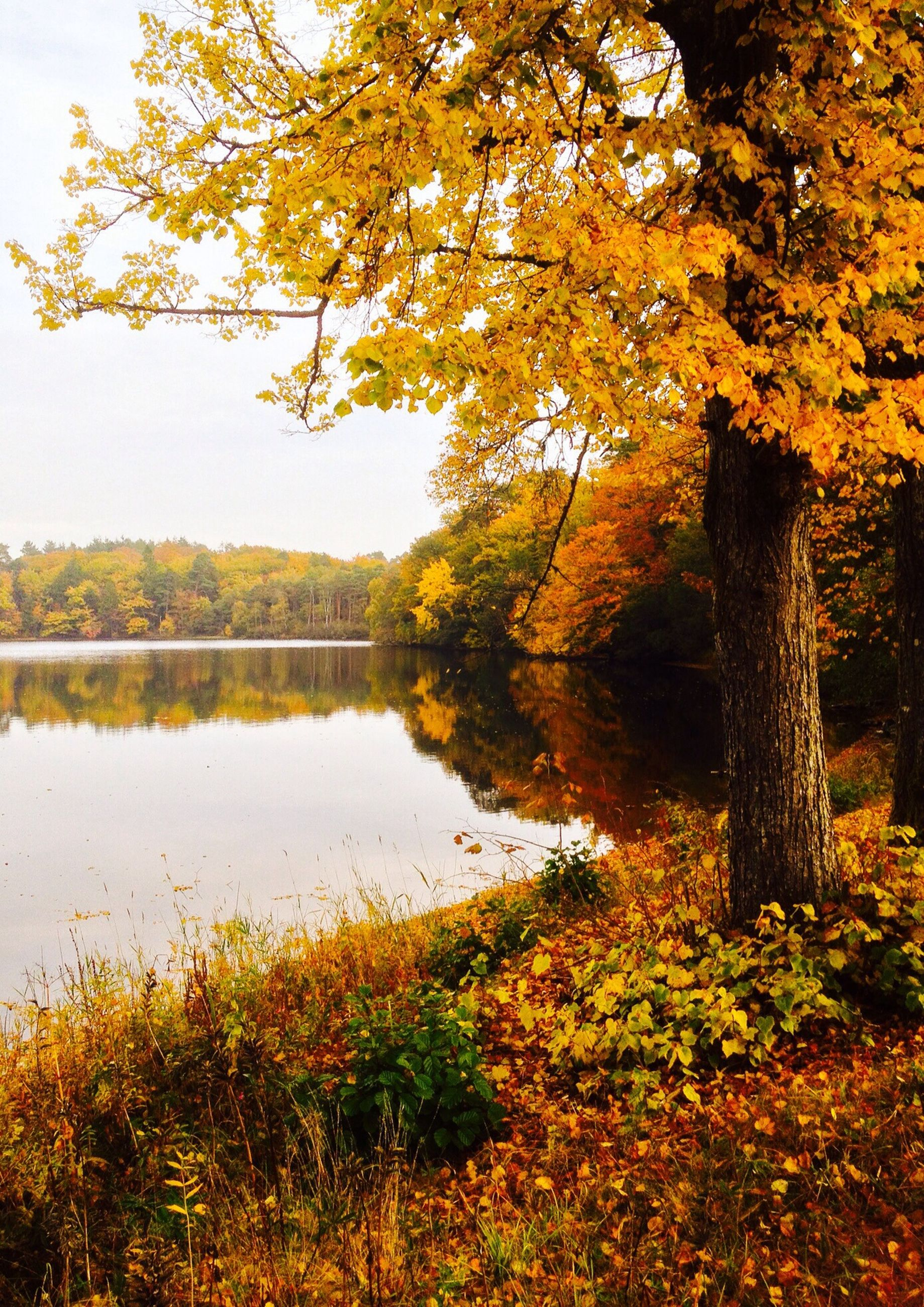 tree, water, tranquility, tranquil scene, beauty in nature, reflection, lake, scenics, autumn, growth, nature, branch, river, change, idyllic, forest, sky, non-urban scene, outdoors, plant