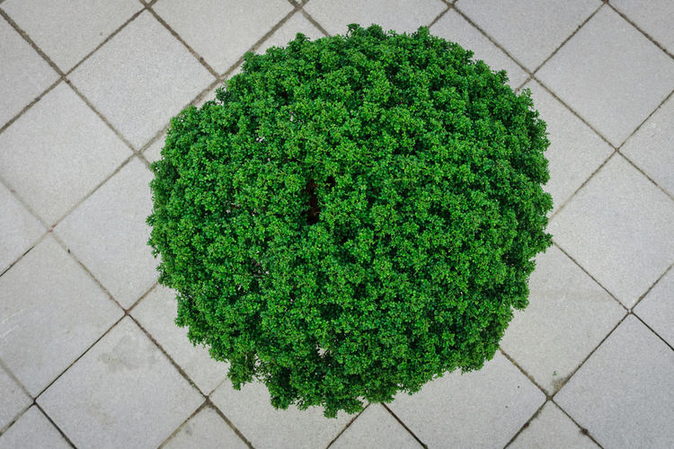 High angle view of green plant on footpath