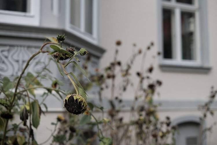 Close-up of flowering plant on window of building