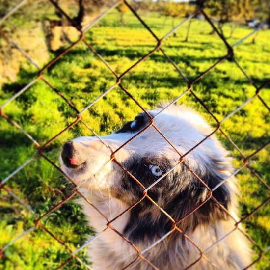 Ca Animals dog Perros