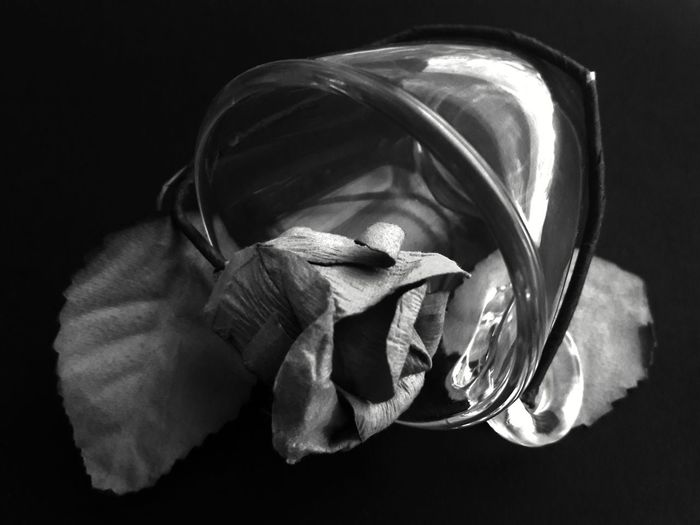 YOU FELL IN LOVE WITH MY FLOWERS, BUT NOT WITH MY ROOTS ... SO, WHEN AUTUMN CAME, YOU DIDN'T KNOW WHAT TO DO Still Life Photograpy Stillife Dead Dead Flowers Dead Leaves Dead Nature Dead Leaf Dead Flower Flower Collection Rot Rotted Growing Old Fallen Flowers Falling Down Autumn Flowers Autumn Melancholy Melancholy Day Conceptual Conceptual Photography  Feelingsad Feelingsthroughphotography Blackandwhite Photography Light And Dark Light And Shadow Sadness Loneliness Old Age. Loneliness In A Picture Black Background Directly Above EyeEmNewHere