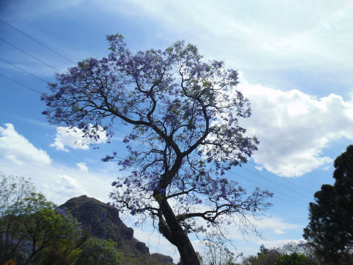 Lovely Sky And Clouds Tree And Sky EyeEm EyeEm Nature Lover EyeEmpics EyeEm Gallery Eye4photography  Flowers Nature💚🌳🍃🌿